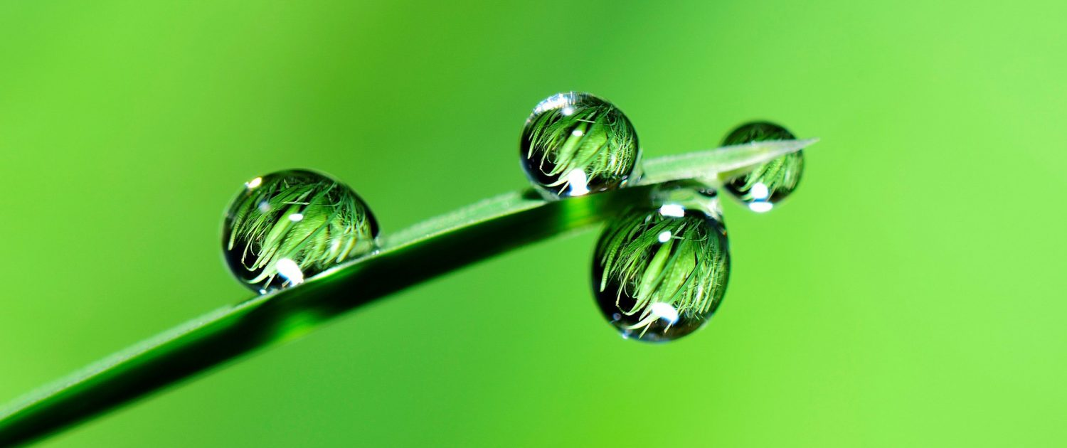 plant left water drops