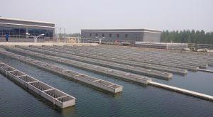 water plant scene